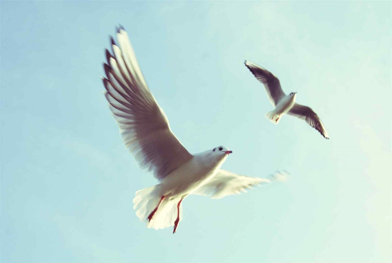 PETS-bird1-1280x857.jpg