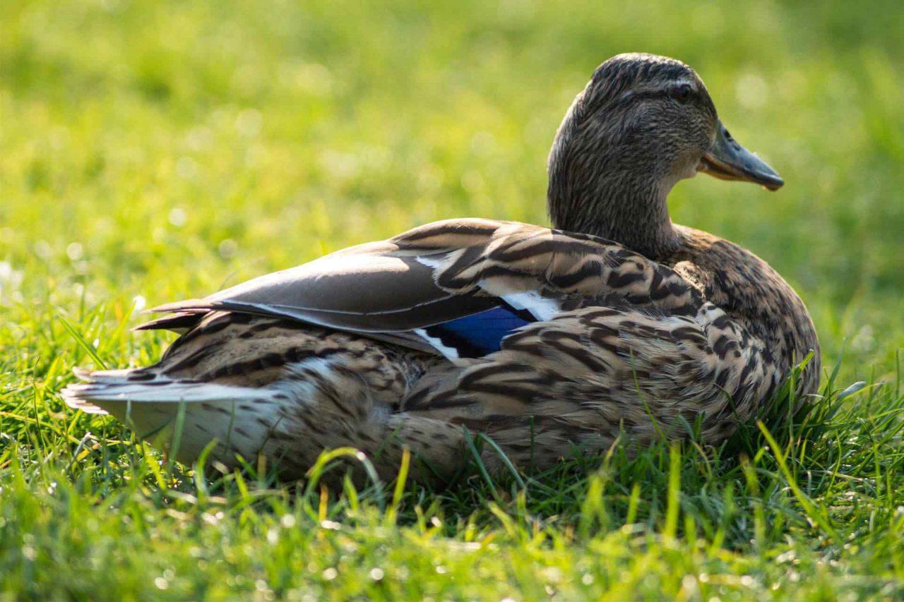 PETS-bird4-1280x853.jpg