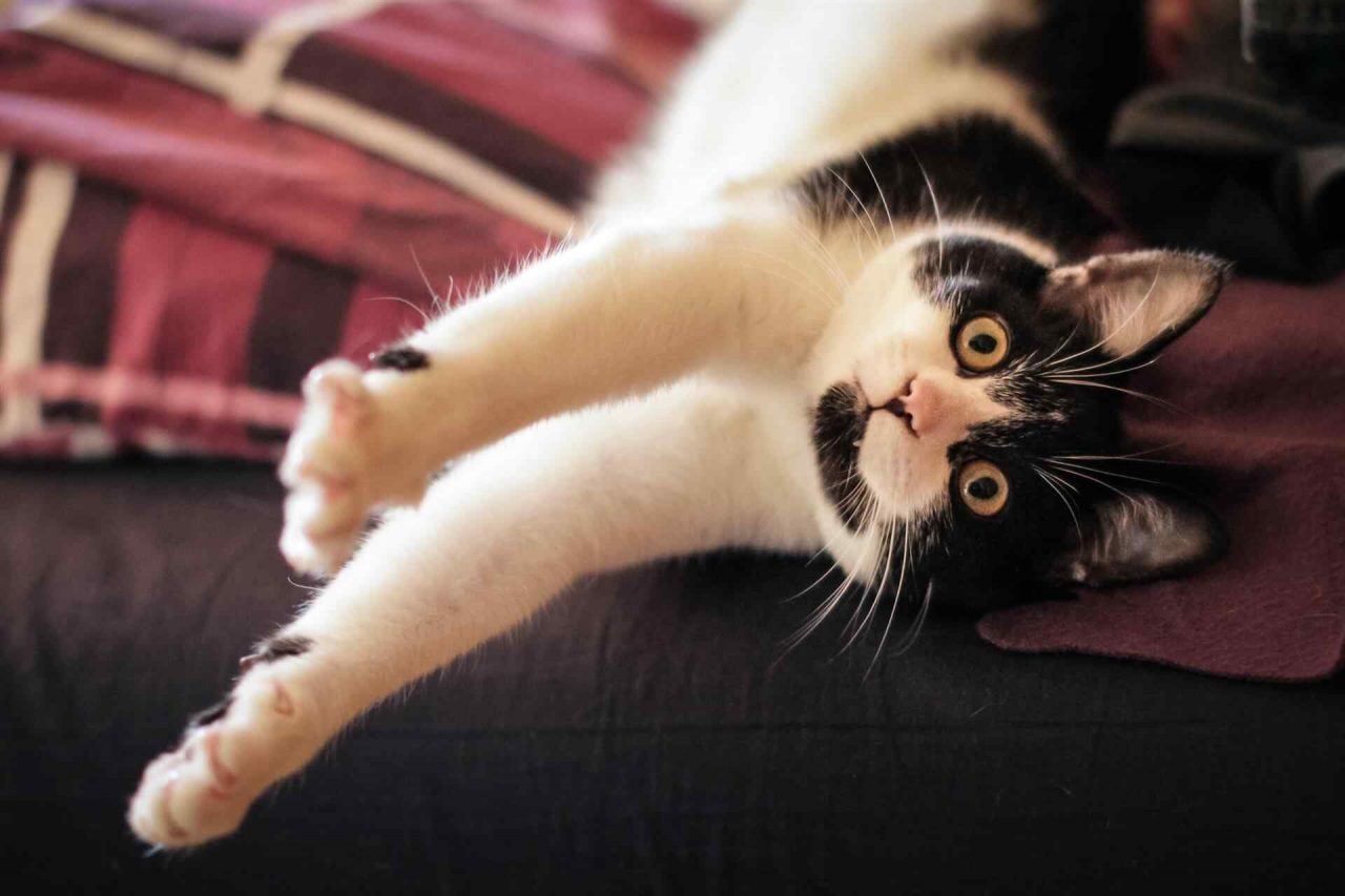 PETS-cats4-1280x853.jpg
